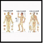 Acupuncture charts